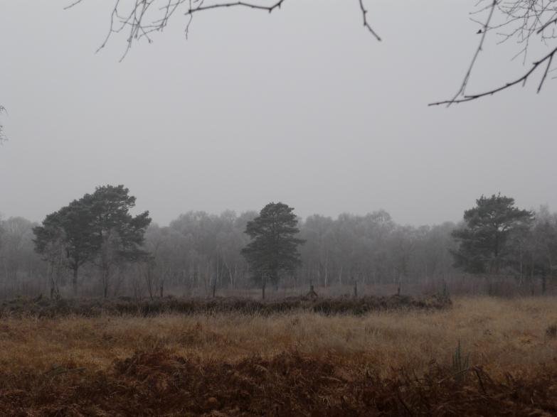 Brentmoor Heath